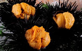 海の幸『殻付き生ウニ・本ずわい蟹・南蛮エビ』など豪華な会席